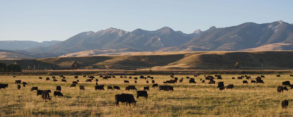 Ranchland Feeds
